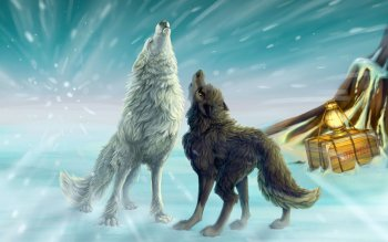 Animal - Wolf Wallpapers and Backgrounds ID : 292203