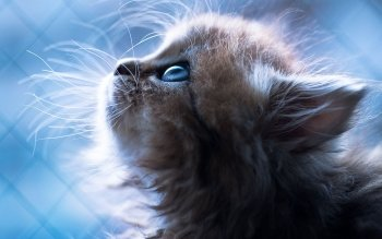 Animal - Cat Wallpapers and Backgrounds ID : 293313