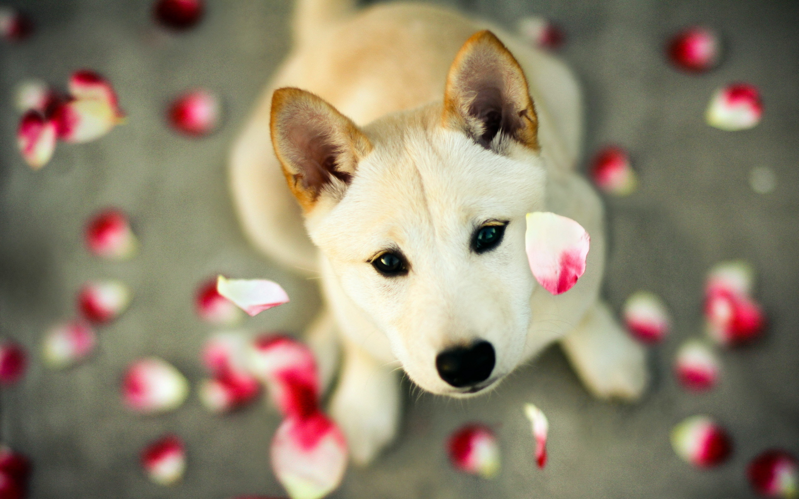 baby and shiba inu wallpaper - photo #13