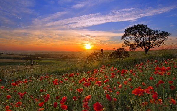 Earth Sunset Landscape Scenic Flower Sky Cloud Field Poppy Sunrise HD Wallpaper | Background Image