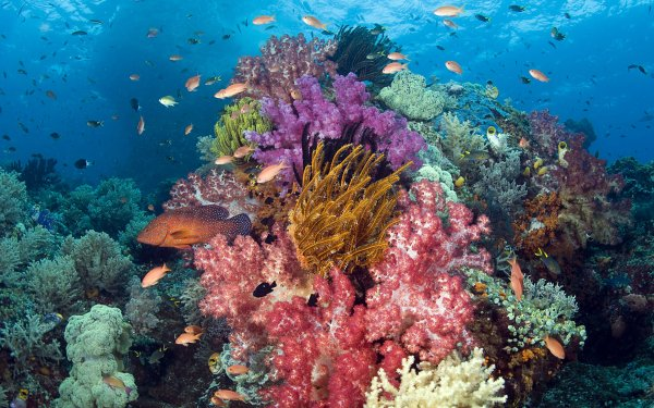 Animal Sea Life Fish Underwater Coral HD Wallpaper | Background Image