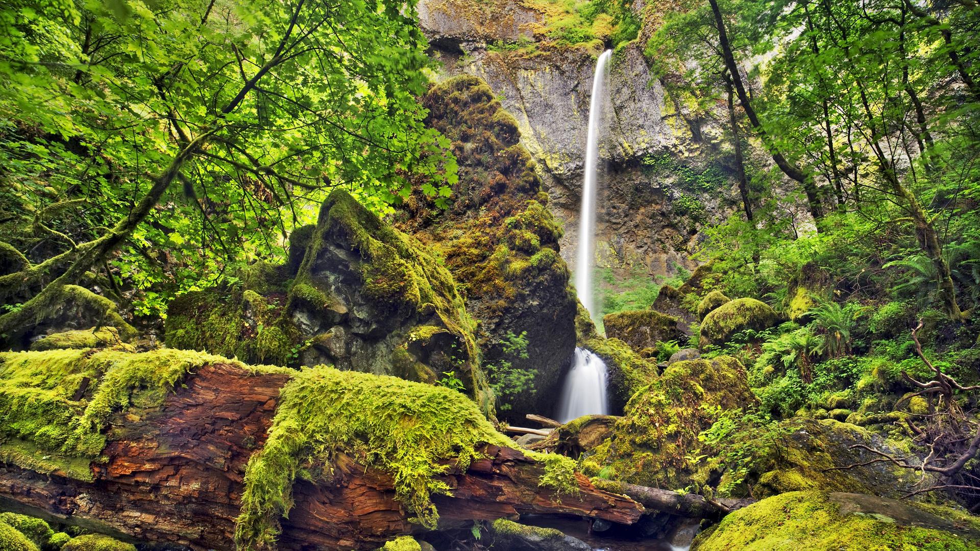 Elowah falls columbia river gorge oregon hd wallpaper - Waterfalls desktop wallpaper forest falls ...