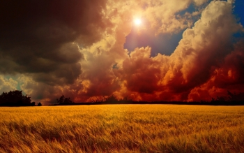 Earth - Wheat Wallpapers and Backgrounds ID : 299993