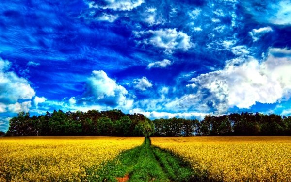 Earth Landscape Meadow Sunny Cloud Sky Blue Field Summer Yellow Flower HD Wallpaper | Background Image