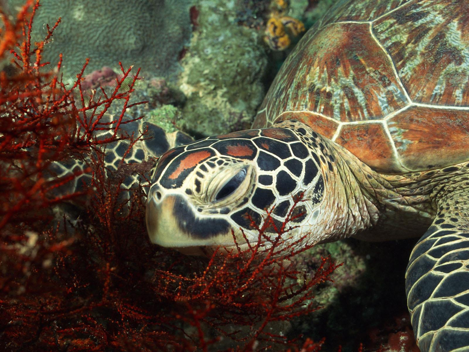 Djur - Turtle  Bakgrund