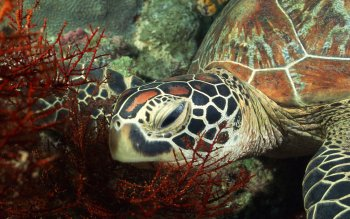 Animalia - Tortuga Wallpapers and Backgrounds ID : 30253