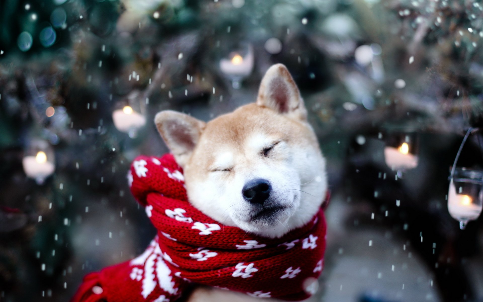 Animal - Dog  Cute Snow Winter Wallpaper