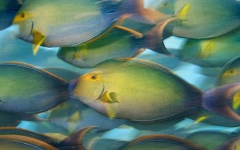 Animal - Fish Wallpapers and Backgrounds ID : 309653