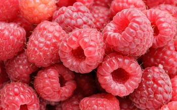 Food - Raspberry Wallpapers and Backgrounds ID : 3433