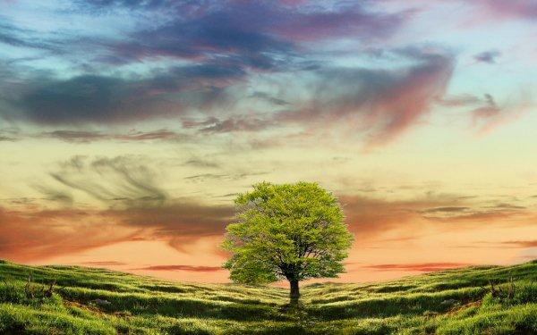 Terre/Nature Arbre Arbres Fond d'écran HD | Arrière-Plan
