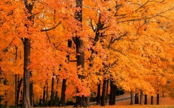 837 Fall Hd Wallpapers Background Images Wallpaper Abyss