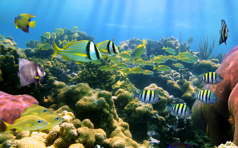 download aquarium 3d live wallpaper for pc