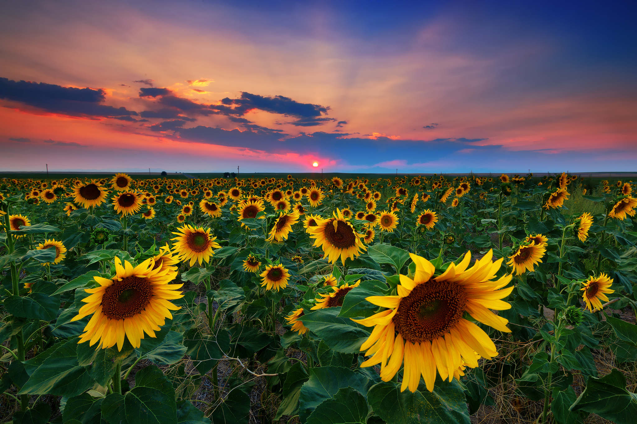 Sunflower HD Wallpaper | Background Image | 2048x1365 | ID ...