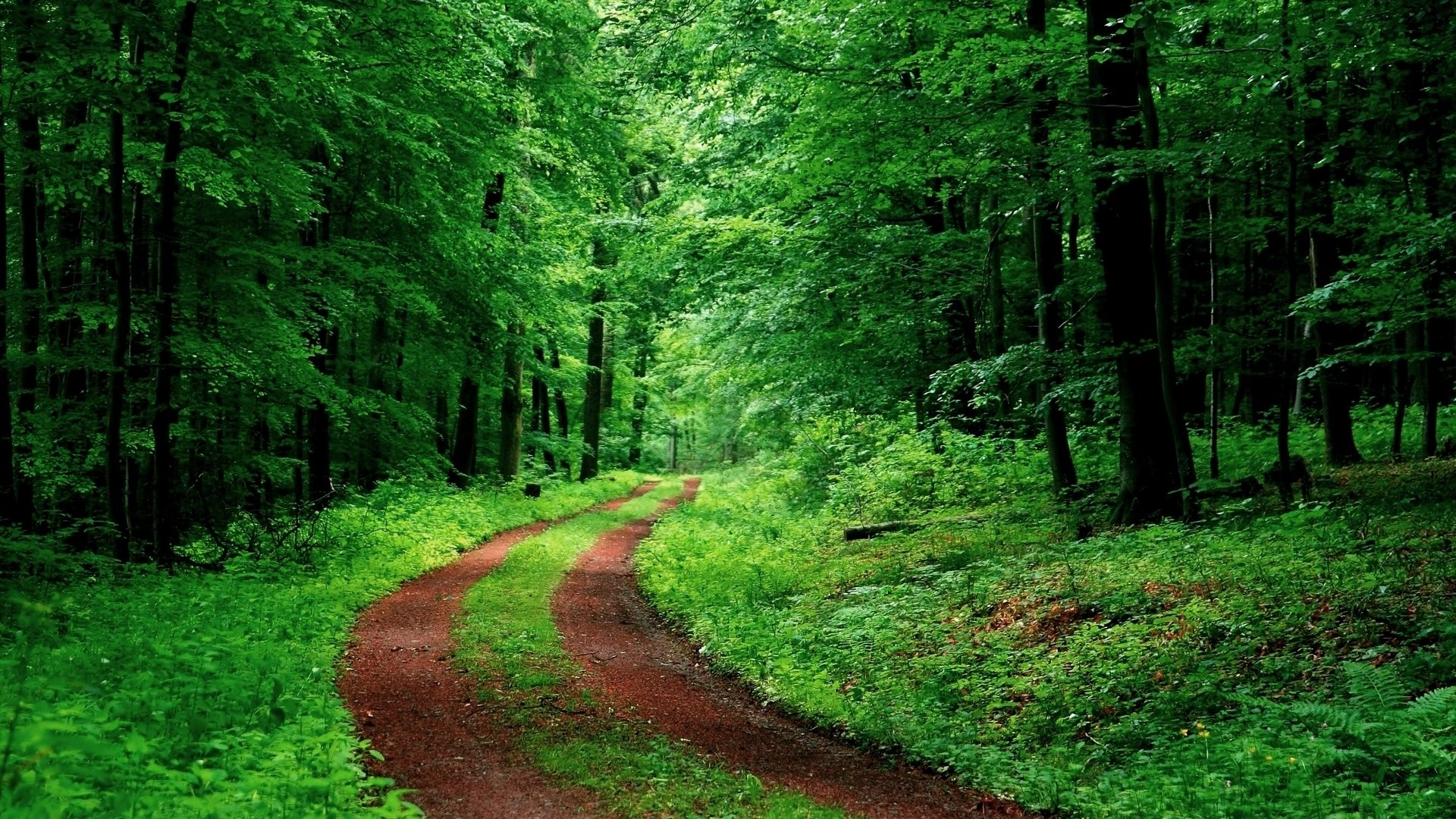 Man Made - Path  Green Vegetation Forest Nature Wallpaper