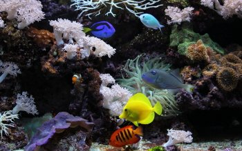 Fotografie - Aquarium Wallpapers and Backgrounds ID : 436167