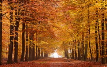 Terra - Autunno Wallpapers and Backgrounds ID : 437625