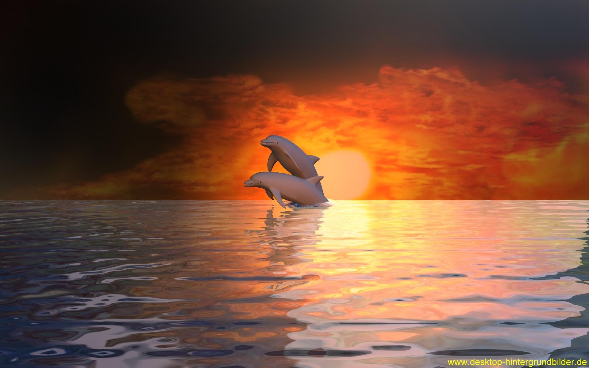 Delfin HD Wallpaper | Hintergrund | 1920x1200 | ID:439259