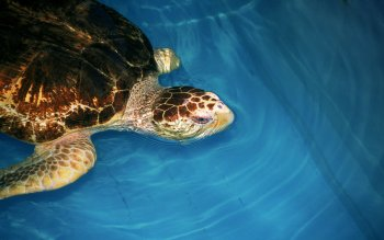 Animal - Turtle Wallpapers and Backgrounds ID : 440136