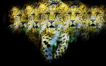 Animalia - Jaguar Wallpapers and Backgrounds ID : 440327