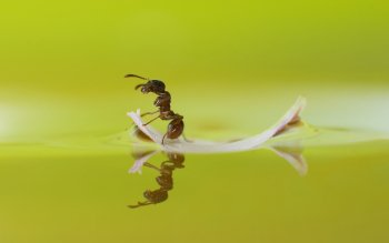 Animal - Ant Wallpapers and Backgrounds ID : 440367