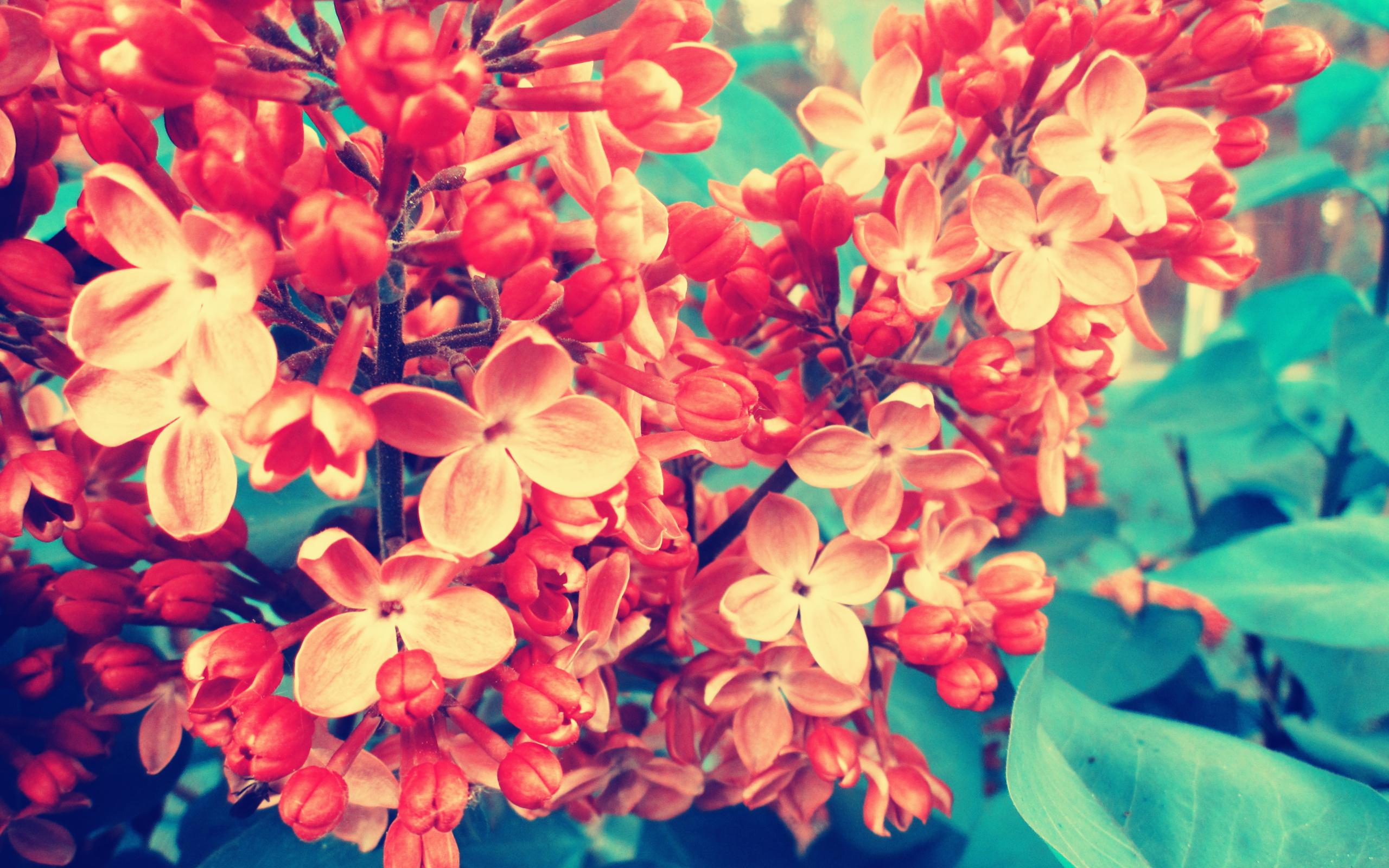 Фото букетов цветов высокого качества и большого размера: 51 33