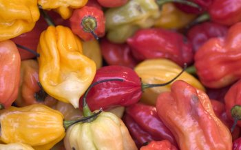 Food - Pepper Wallpapers and Backgrounds ID : 441142