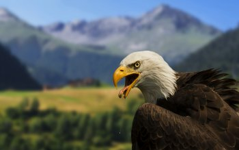 Animal - Eagle Wallpapers and Backgrounds ID : 442157