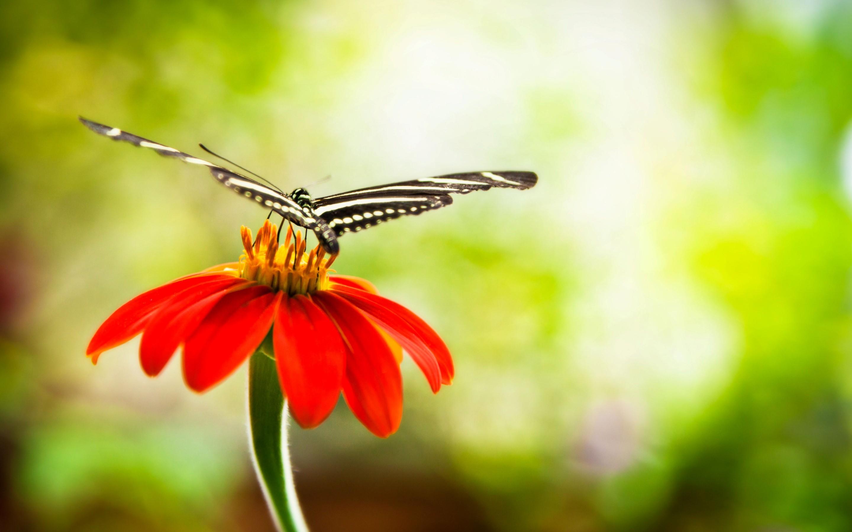 papillon full hd fond d 39 cran and arri re plan 2880x1800 id 443250. Black Bedroom Furniture Sets. Home Design Ideas