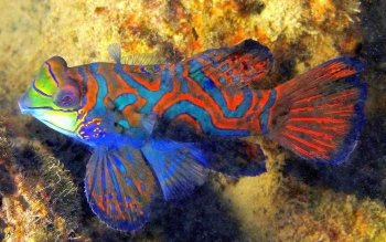 Animal - Fish Wallpapers and Backgrounds ID : 444754
