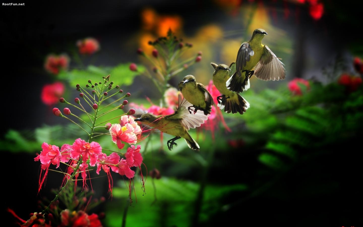 Humming Bird Wallpaper And Background Image