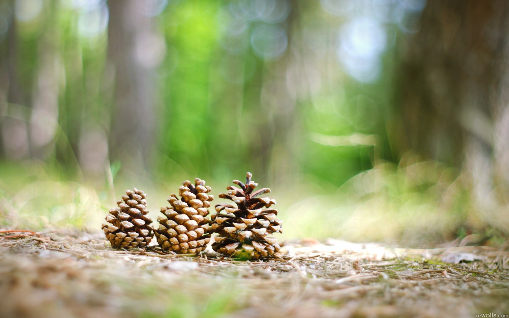 5 pinecone hd wallpapers backgrounds wallpaper abyss for Pinecone wallpaper