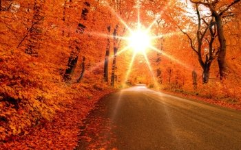 Fotografie - Herbst Wallpapers and Backgrounds ID : 447543