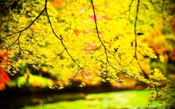 Earth - Autumn Wallpapers and Backgrounds ID : 451032