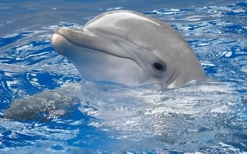Animal - Dolphin Wallpapers and Backgrounds ID : 451294