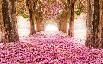 Earth - Spring Wallpapers and Backgrounds ID : 452047