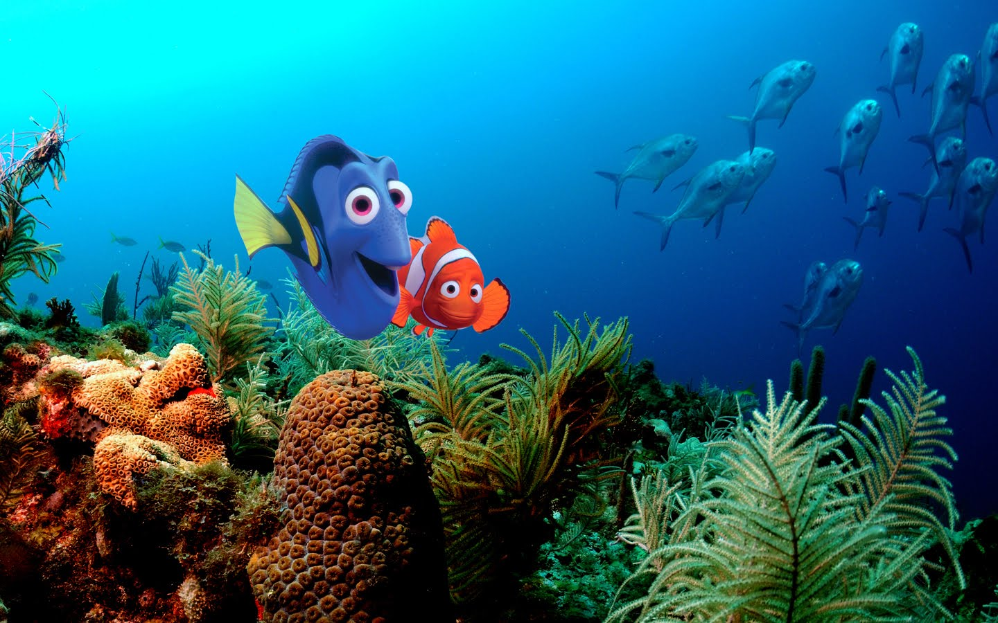 finding nemo wallpaper and background image | 1440x900 | id:453148