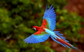 Animal - Macaw Wallpapers and Backgrounds ID : 453562