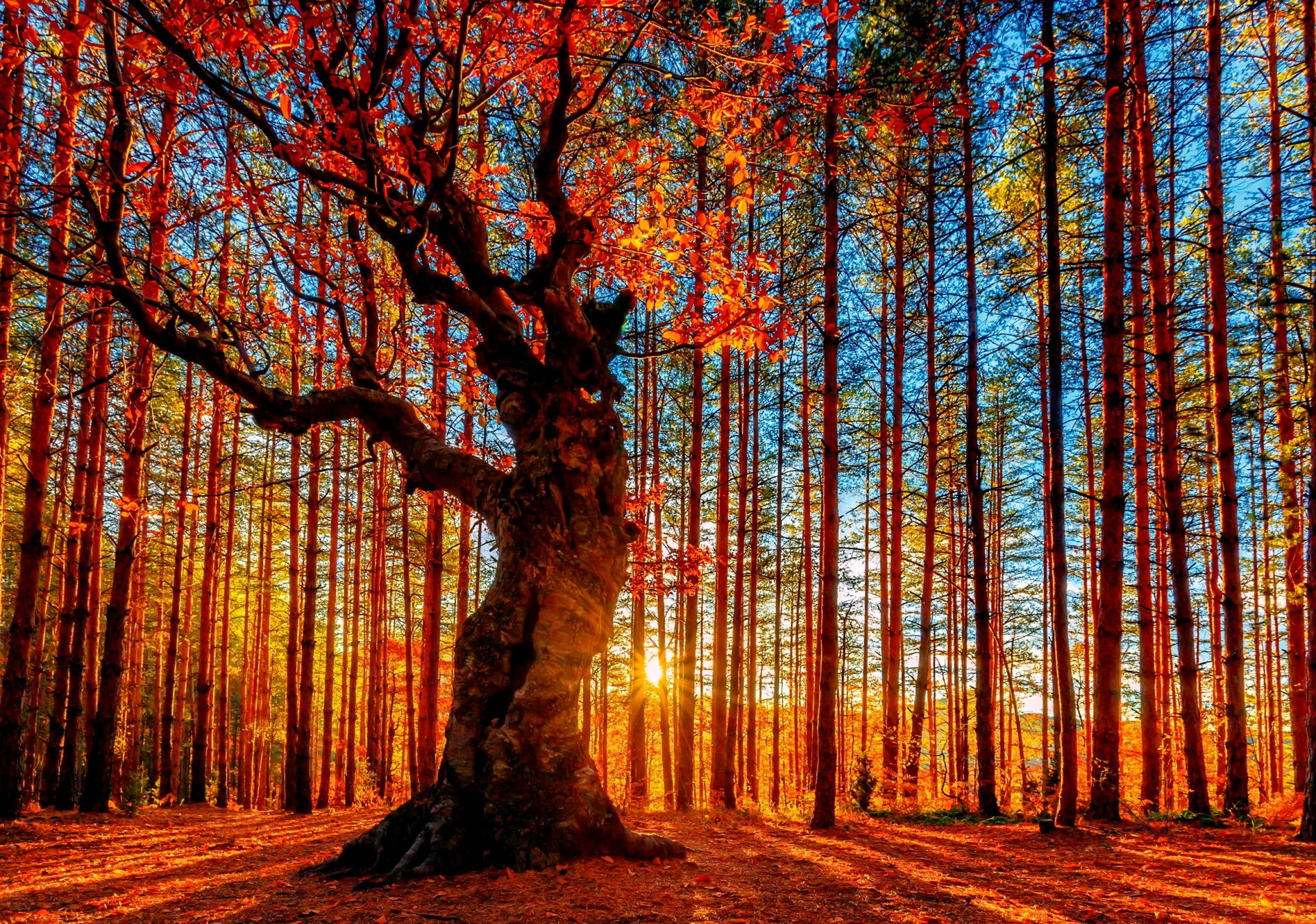 Earth - Tree  Wallpaper