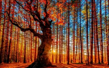 Terra - Alberi Wallpapers and Backgrounds ID : 457646
