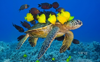 Animalia - Tortuga Wallpapers and Backgrounds ID : 458046
