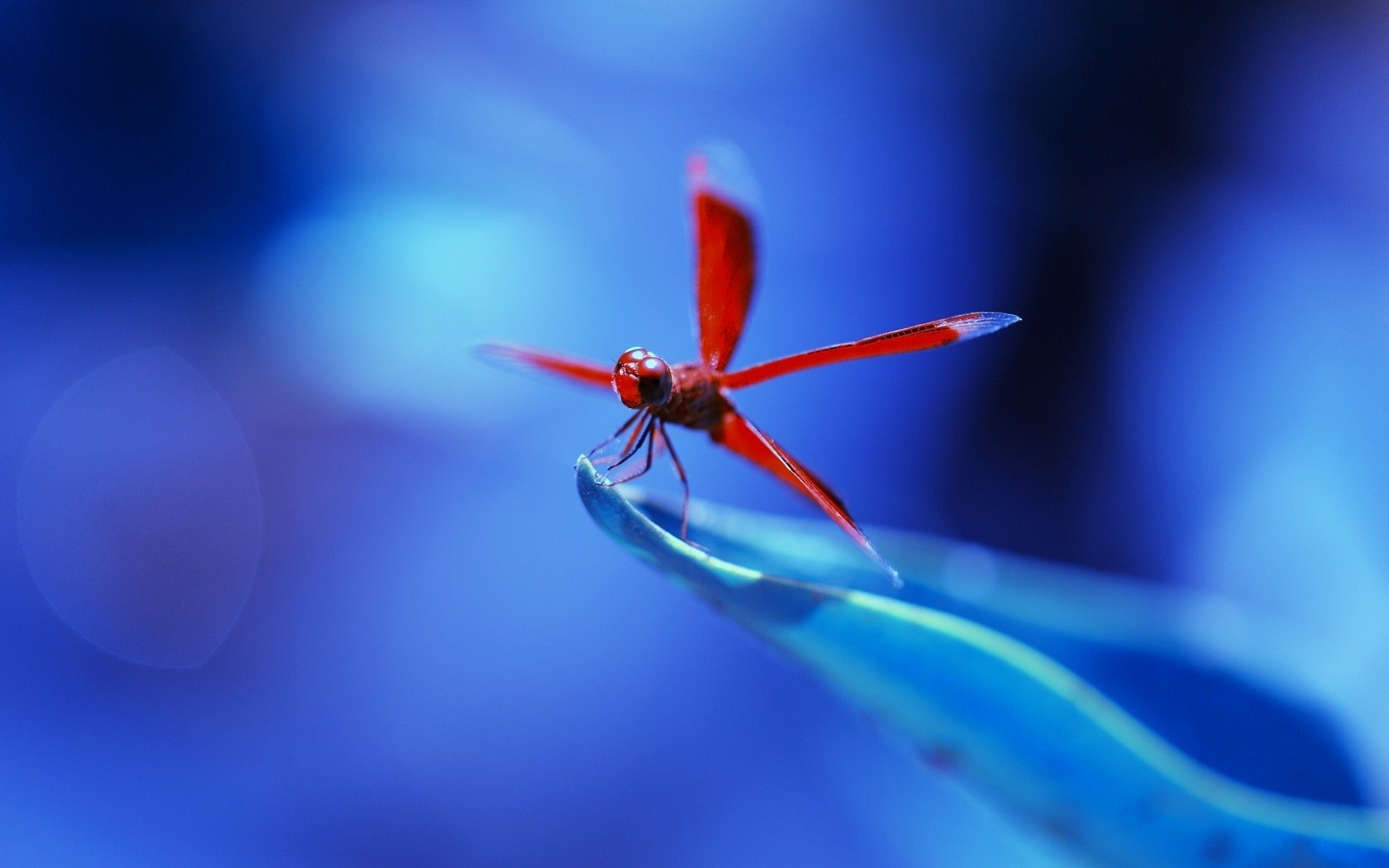 232 dragonfly hd wallpapers | backgrounds - wallpaper abyss