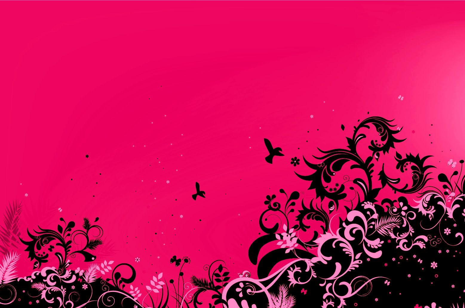 pink wallpaper and background image | 1557x1034 | id:467415