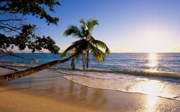 Earth - Beach Wallpapers and Backgrounds ID : 4673