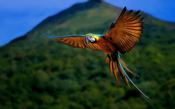 Animal - Macaw Wallpapers and Backgrounds ID : 469661