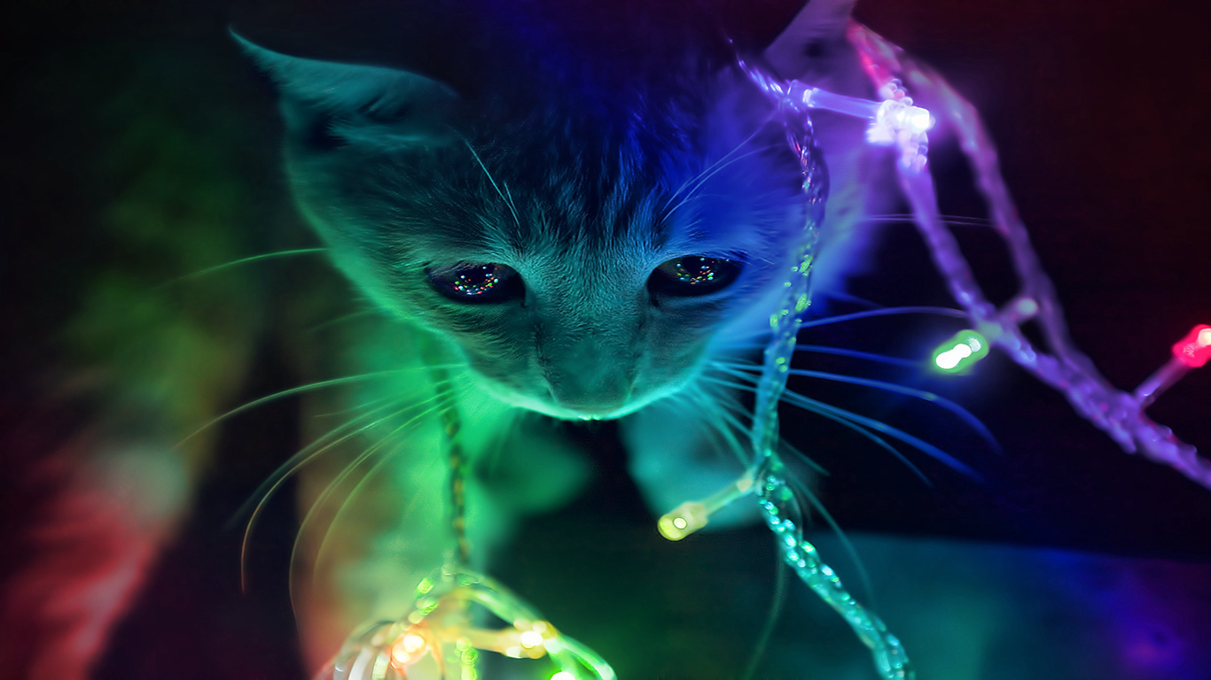 Christmas kitty wallpaper and background image 1366x768 - Cool animal wallpaper light ...