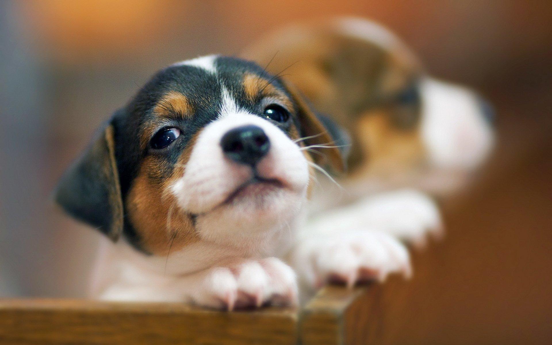 Animal - Dog  Animal Pet Wallpaper