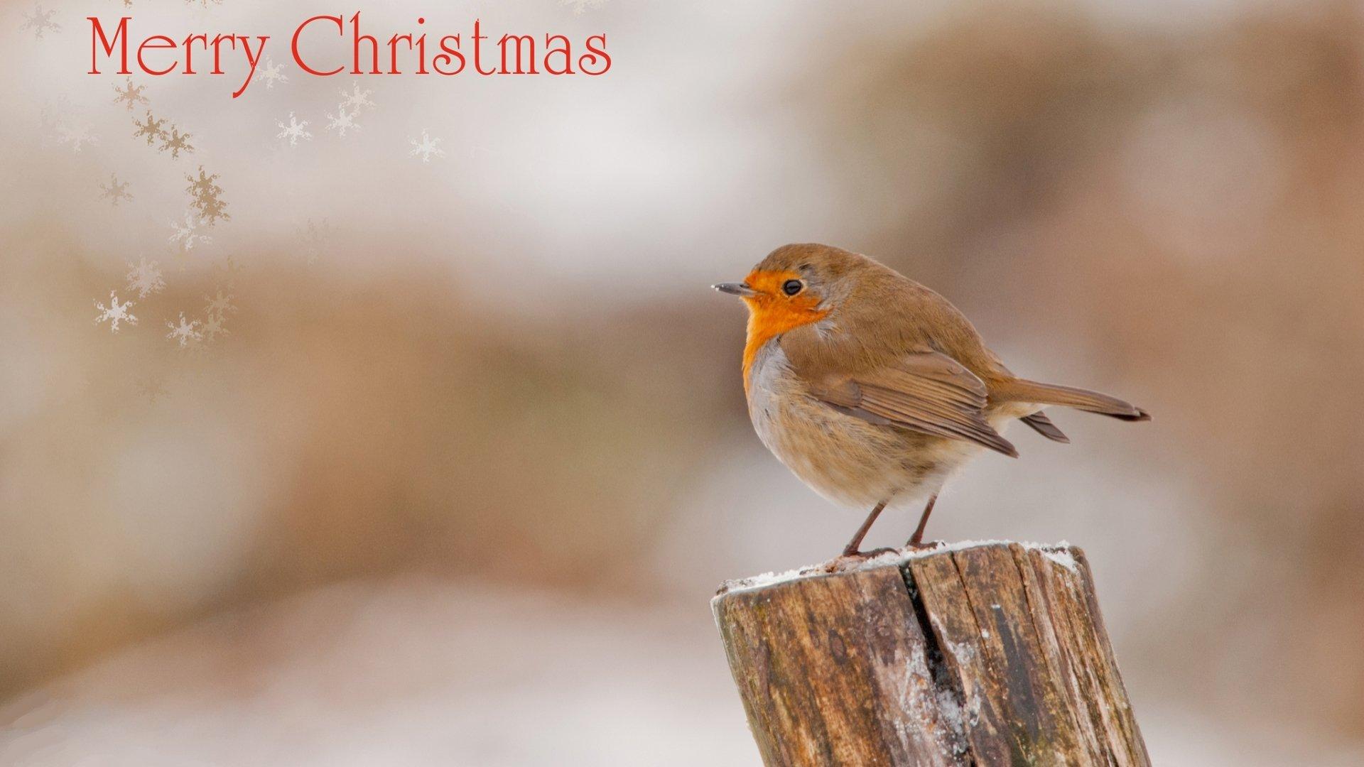 Holiday - Christmas  Merry Christmas Wallpaper