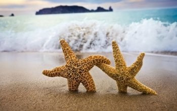 92 Starfish HD Wallpapers