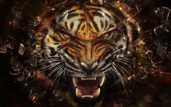 Tier - Tiger Wallpapers and Backgrounds ID : 472563