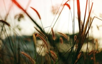 Earth - Grass Wallpapers and Backgrounds ID : 473195